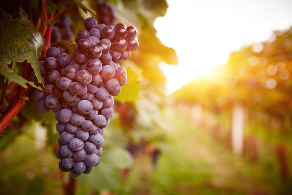 In Lebanese Vineyard, LoRaWAN Is Making Wine Better