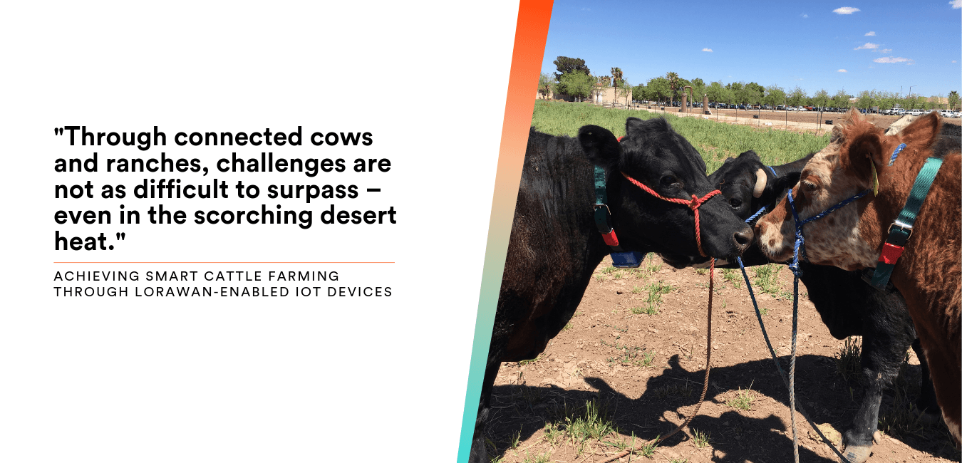 Cattle Tracking Challenge Accepted: Connecting New Mexico Cows and Desert Ranches with Abeeway